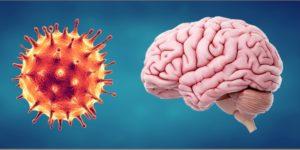 coronavirus and a brain